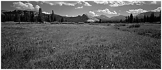Tuolume Meadows in summer with indian paintbrush. Yosemite National Park (Panoramic black and white)