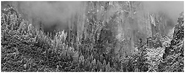 Cliffs and distant snowy trees. Yosemite National Park (Panoramic black and white)