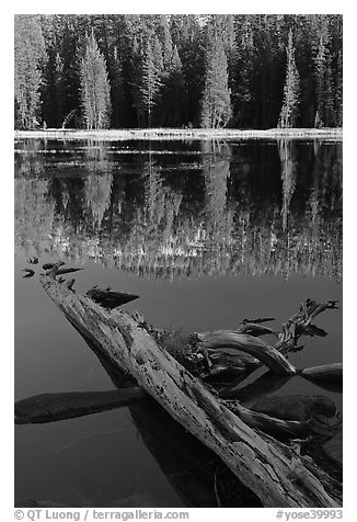 Fallen tree in shade and shore, Siesta Lake. Yosemite National Park (black and white)