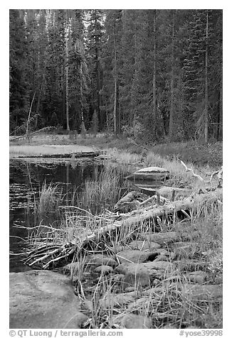 Shore with fall colors, Siesta Lake. Yosemite National Park (black and white)