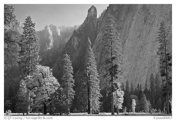 Oaks, pine trees, and rock wall. Yosemite National Park (black and white)