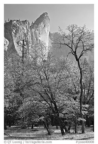 Trees in fall foliage and Leaning Tower. Yosemite National Park (black and white)