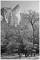Trees in fall foliage and Leaning Tower. Yosemite National Park, California, USA. (black and white)