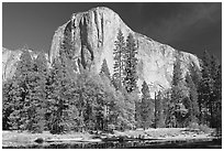 Trees along  Merced River and El Capitan. Yosemite National Park, California, USA. (black and white)