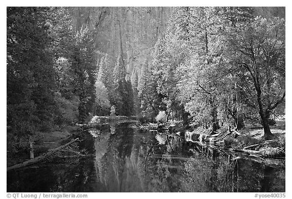 Merced River, trees, and rock wall. Yosemite National Park (black and white)