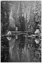 Merced River, trees and reflections at the base of Cathedral Rocks. Yosemite National Park ( black and white)