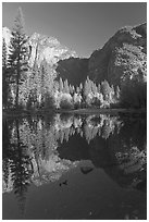 Autumn morning reflections, Merced River. Yosemite National Park ( black and white)