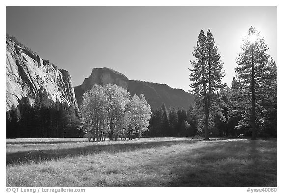 Ahwahnee Meadow with sun shinnig through tree, early morning. Yosemite National Park (black and white)