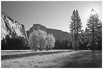 Ahwahnee Meadow with sun shinnig through tree, early morning. Yosemite National Park ( black and white)