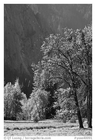 Autumn trees in Cook Meadow. Yosemite National Park (black and white)