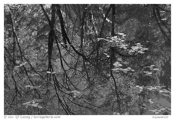 Reflections of cliffs and trees in creek. Yosemite National Park (black and white)