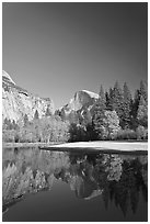 Trees in fall foliage and Half-Dome reflected in Merced River. Yosemite National Park ( black and white)