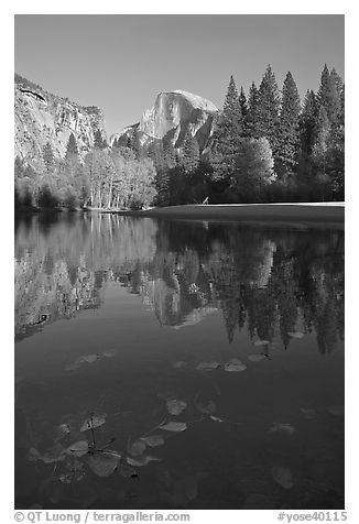 Fallen leaves, Merced River, and Half-Dome reflections. Yosemite National Park (black and white)