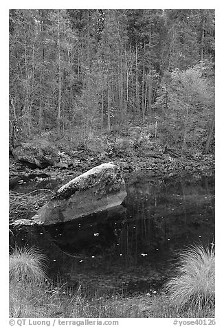 Boulder and reflections in  Merced River in autumn. Yosemite National Park (black and white)