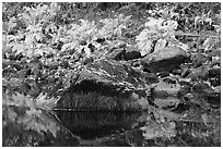 Ferms, mossy boulders, and reflections. Yosemite National Park, California, USA. (black and white)