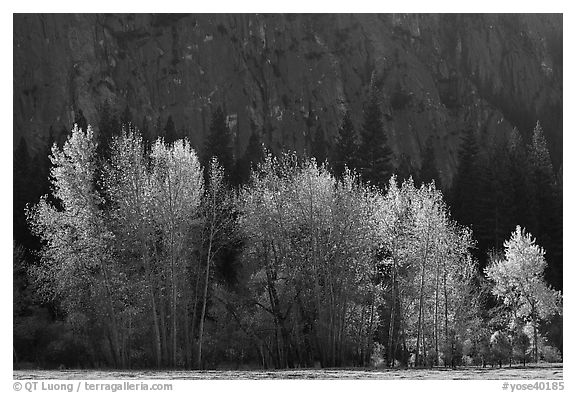Trees with sparse autumn leaves, Sentinel Meadow. Yosemite National Park (black and white)