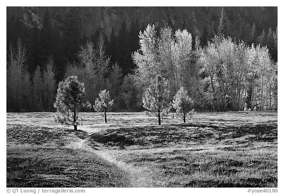 Trail in Sentinel Meadow in autumn. Yosemite National Park (black and white)