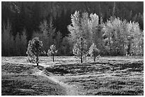 Trail in Sentinel Meadow in autumn. Yosemite National Park ( black and white)