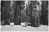 Mariposa Grove Museum at the base of giant trees in winter. Yosemite National Park, California, USA. (black and white)