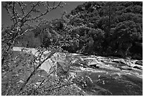 Redbud in bloom and Merced River, Lower Merced Canyon. Yosemite National Park ( black and white)