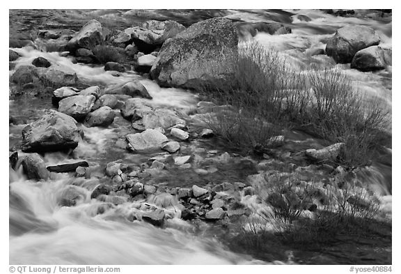 Rapids and shrubs, early spring, Lower Merced Canyon. Yosemite National Park (black and white)