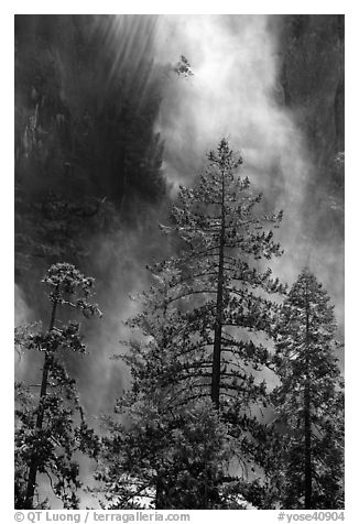 Trees and falling water, Bridalveil falls. Yosemite National Park (black and white)