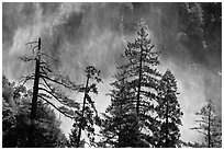 Trees and mist from Bridalveil falls. Yosemite National Park, California, USA. (black and white)
