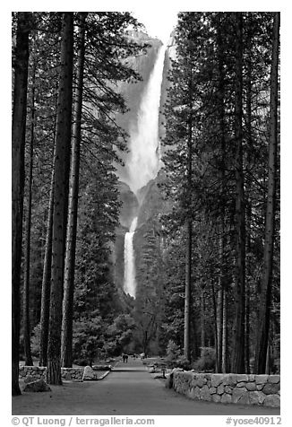 Path leading to Yosemite Falls framed by tall pine trees. Yosemite National Park (black and white)
