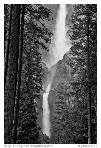 Upper and Lower Yosemite Falls framed by pine trees. Yosemite National Park (black and white)