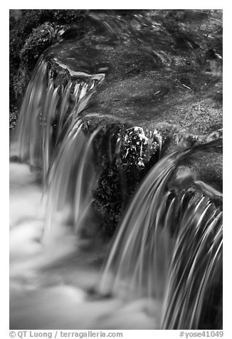 Fern Spring in the Spring. Yosemite National Park (black and white)