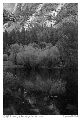 Refections and green trees, Mirror Lake. Yosemite National Park (black and white)