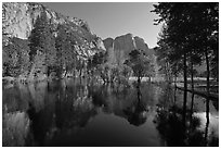 Swollen Merced River reflecting trees and cliffs. Yosemite National Park ( black and white)