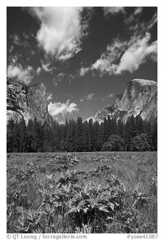 Meadow, Washington Column, and Half-Dome. Yosemite National Park (black and white)