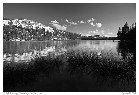 Willows and snowy peaks reflected in Tenaya Lake. Yosemite National Park (black and white)