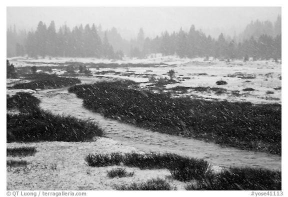 Falling snow streaks, river and meadow. Yosemite National Park (black and white)