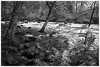 Azelea and Merced River, Happy Isles. Yosemite National Park, California, USA. (black and white)