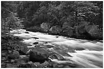 Merced River with newly leafed trees and dogwood, Happy Isles. Yosemite National Park, California, USA. (black and white)
