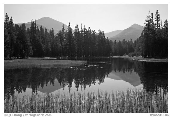 Mount Dana and Mount Gibbs reflected in lake, morning. Yosemite National Park (black and white)