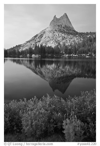 Lupine, Cathedral Peak, and reflection. Yosemite National Park (black and white)