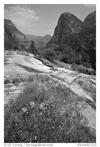 Summer wildflowers, Kolana Rock, and Hetch Hetchy reservoir. Yosemite National Park (black and white)