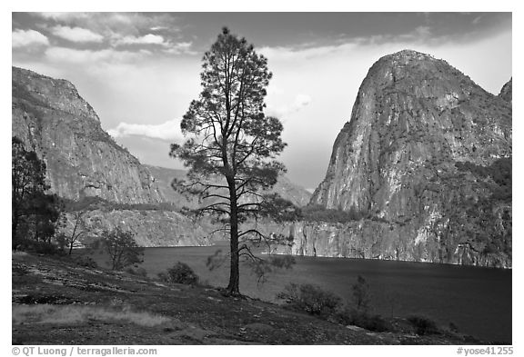 Tree, Kolana Rock and Hetch Hetchy reservoir. Yosemite National Park (black and white)