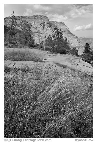 Flowers, grasses, and Hetch Hetchy Dome. Yosemite National Park (black and white)