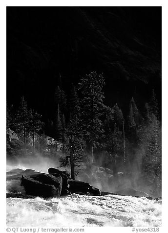 Tree in swirling waters and forest in shade, Waterwheel Falls. Yosemite National Park (black and white)