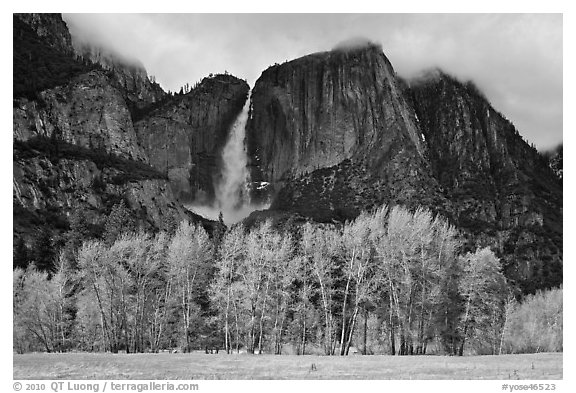 Bright trees in spring and dark Yosemite Falls. Yosemite National Park (black and white)