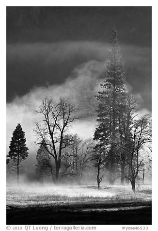 Morning fog and trees. Yosemite National Park (black and white)