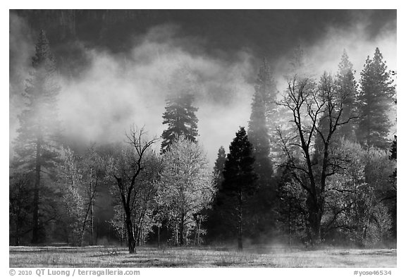 Fog lifting above trees in spring. Yosemite National Park (black and white)
