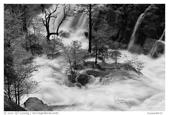 Islet of trees at confluence, Cascade Creek. Yosemite National Park (black and white)