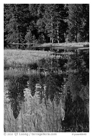 Cathedral Rocks reflected in seasonal pond. Yosemite National Park (black and white)