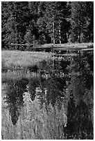 Cathedral Rocks reflected in seasonal pond. Yosemite National Park ( black and white)