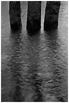 Three flooded tree trunks. Yosemite National Park, California, USA. (black and white)